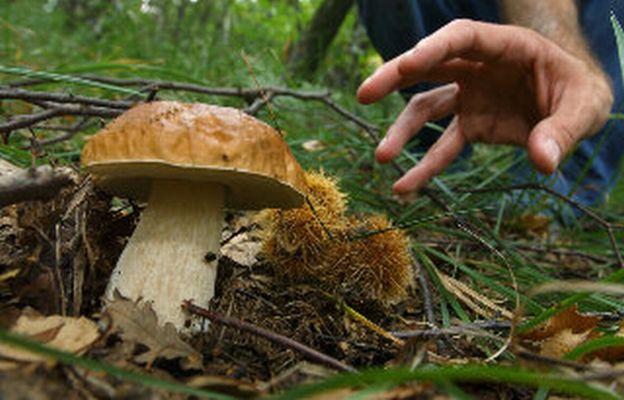 Pdl raccolta funghi: sistemato il pasticcio della maggioranza dopo le proteste dei comuni