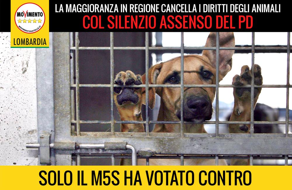 Regione cancella i diritti degli animali: con il nuovo Pdl balzo indietro di 25 anni