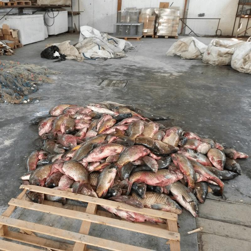 Più controlli contro la pesca illecita sul fiume Po. Sì all'ODG del M5S