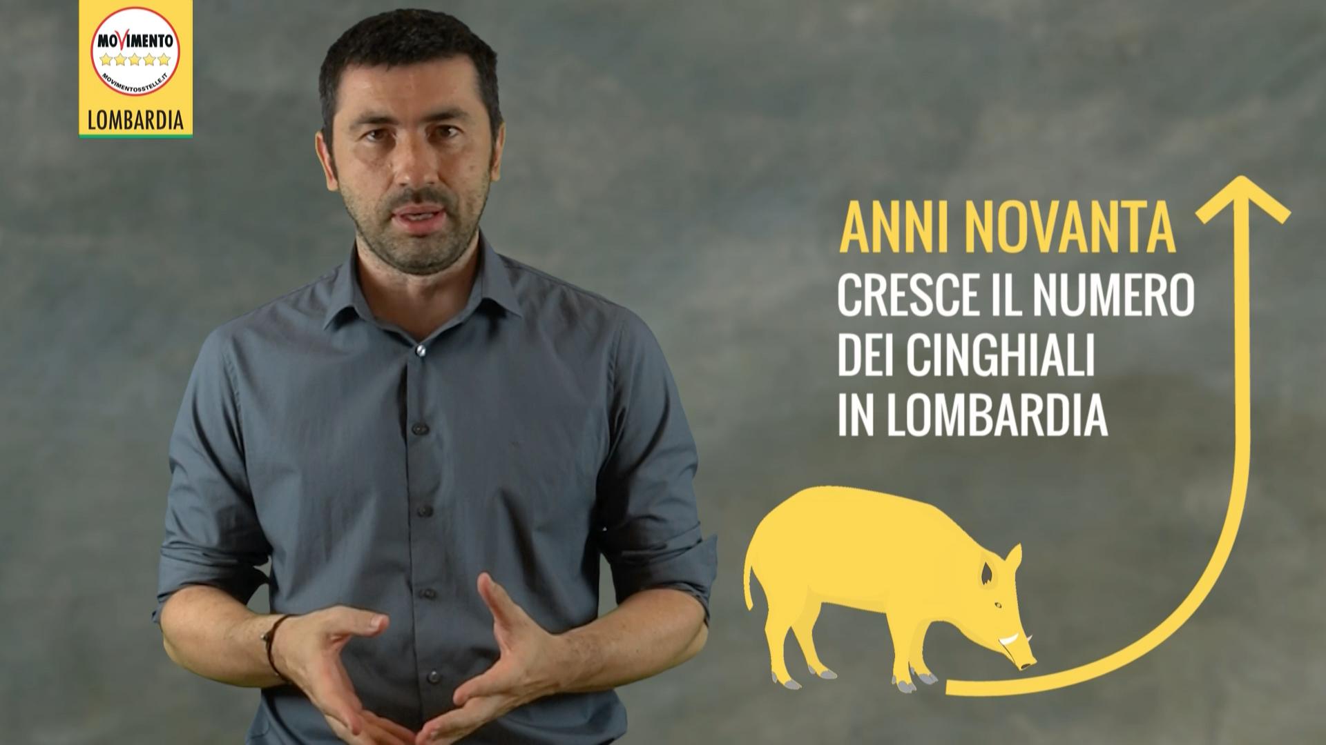 Problema cinghiali, le proposte del M5S Lombardia.