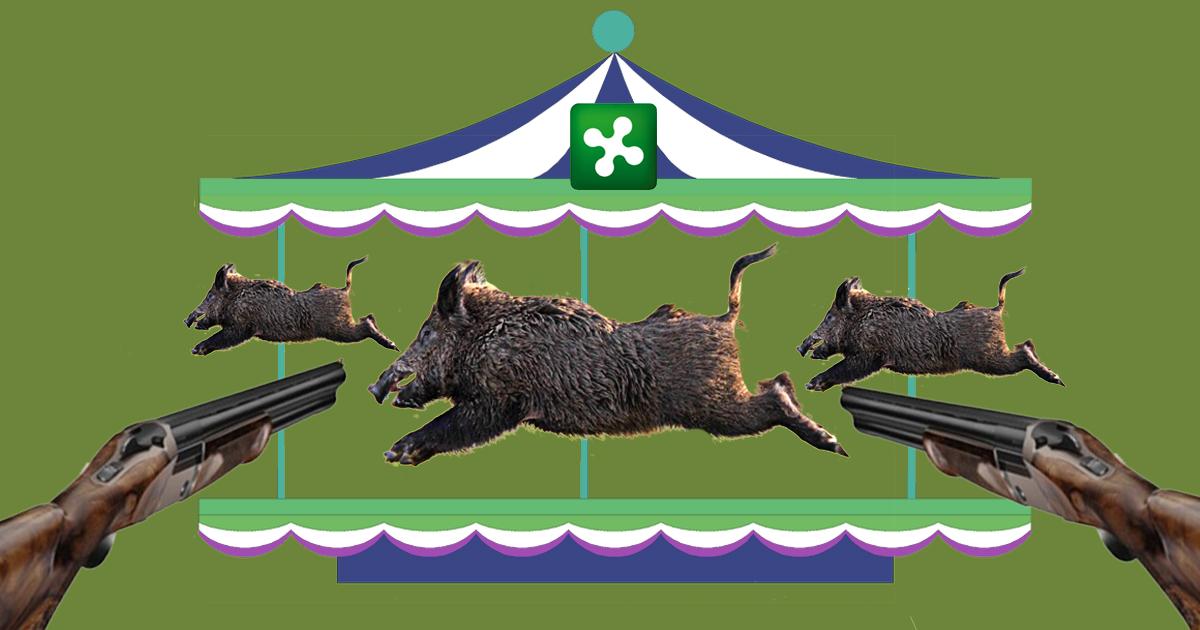 La legge sui cinghiali rende Lombardia un luna park per cacciatori.