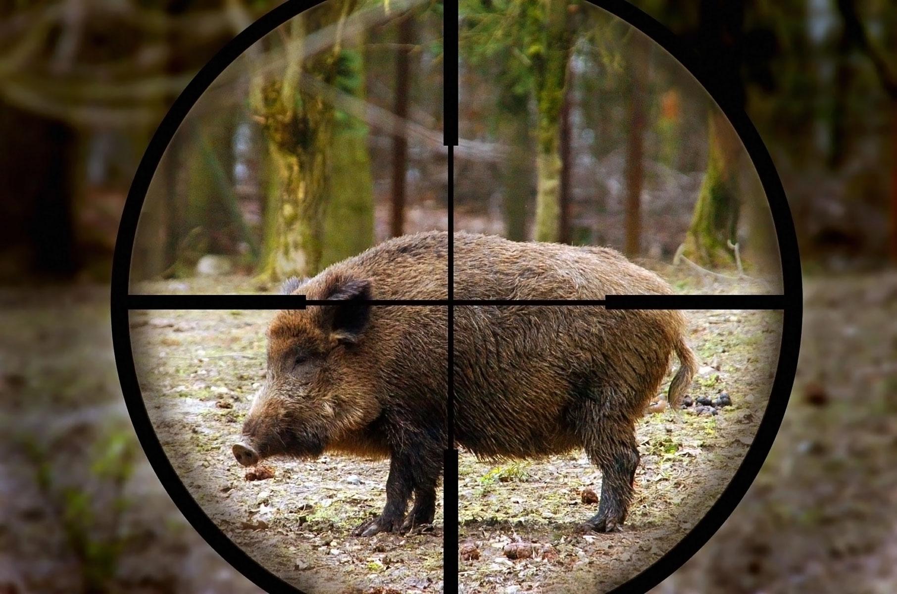 Pd e Lega sdoganano la caccia in tutto il week end. Bocciato emendamento M5S per lo stop di domenica
