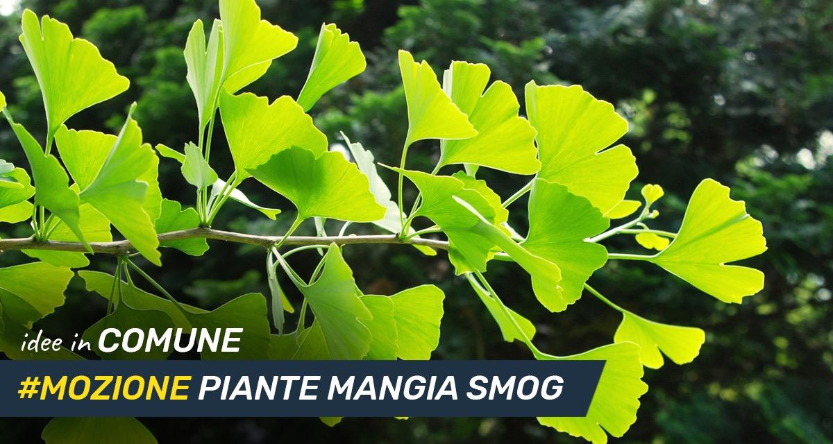 Mettiamo le idee in comune #16: piante mangia smog.