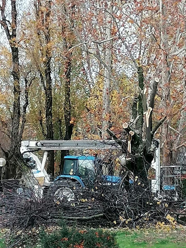 Parco Bassini, 140 alberi abbattuti, uno scempio.