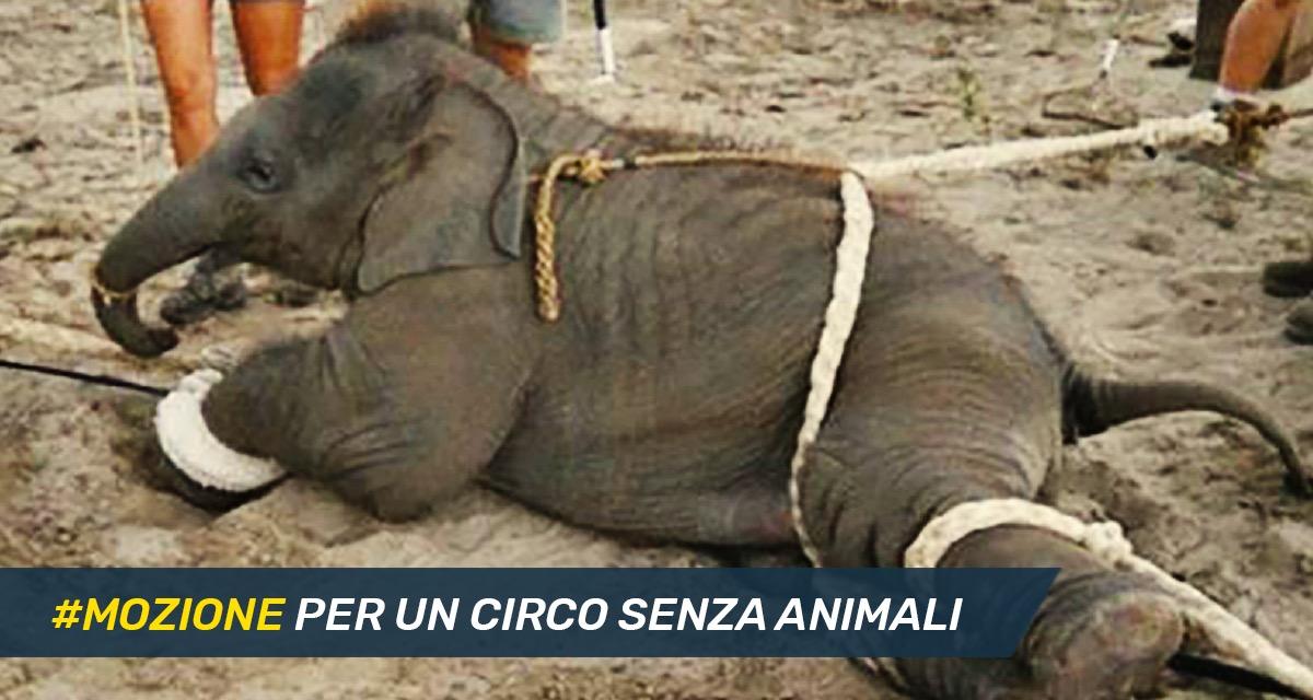 Mettiamo le Idee in Comune #26: mozione per un Circo senza animali